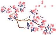 西尾の桜めぐり