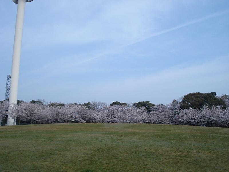 西尾六万石桜まつり