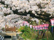 みどり川桜まつり