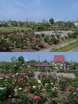 戸ヶ崎公園