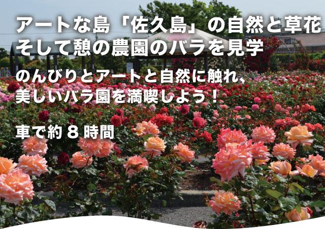 アートな島「佐久島」の自然と草花そして憩の農園のバラを見学