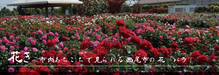 西尾市の花「バラ」特集