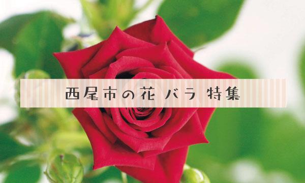 西尾の花 バラ特集
