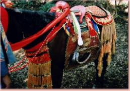 瀬門神社 馬駈神事