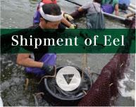 Shipment of Unagi