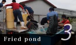 Pond raising